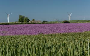 samsoe wind energy